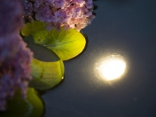Aqua Light 60 LED valaisin